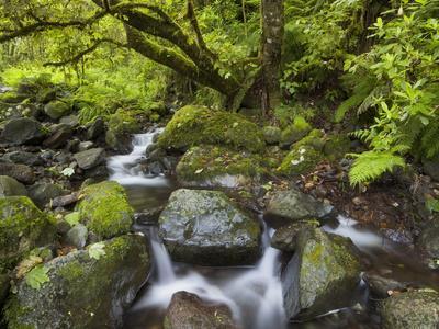 https://imgc.allpostersimages.com/img/posters/rio-silveira-moss-covered-stones-caldeirao-verde-queimados-madeira-portugal_u-L-Q11YPJY0.jpg?p=0