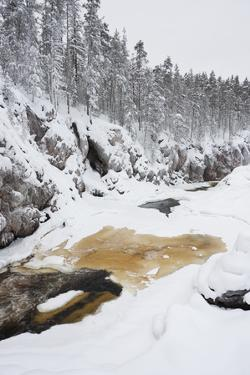 River Flowing in Snowy Winter Forest by Risto0