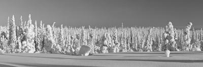 Snowy Forest in Lapland, Finland by Risto0