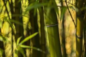 Bamboo Afternoon I by Rita Crane