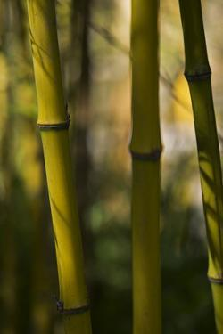 Bamboo Afternoon VIII by Rita Crane