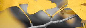 Yellow Gingko I by Rita Crane