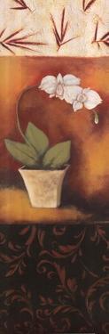 Orchid Poem by Rita Vindedzis