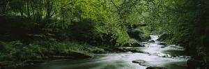 River Flowing in the Forest, Aberfeldy, Perthshire, Scotland