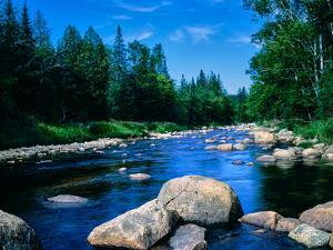 River flowing through a forest, Ausable River, Lake Placid, Adirondack Mountains, Essex County,...