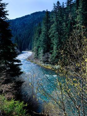 River flowing through a forest, North Umpqua River, Umpqua National Forest, Douglas County, Oreg...