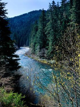 River flowing through a forest, North Umpqua River, Umpqua National Forest, Douglas County, Oreg...