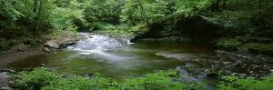 River Flowing through a Forest, Ricketts Glen State Park, Pennsylvania, USA