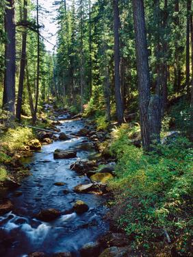 River flowing through a forest, South Fork, Upper Rogue River, Rogue River