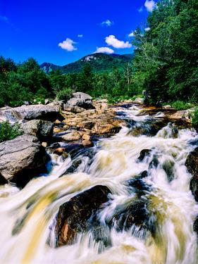 River flowing through a forest, West Branch Ausable River, Adirondack Mountains, New York State...