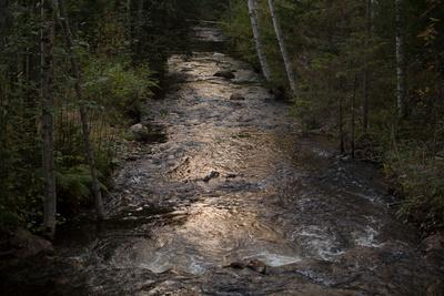 https://imgc.allpostersimages.com/img/posters/river-flows-through-to-the-forest-in-the-evening-light_u-L-Q1EXWDF0.jpg?artPerspective=n