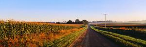 Road Along Rural Cornfield, Illinois, USA