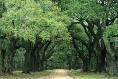 https://imgc.allpostersimages.com/img/posters/road-enclosed-by-moss-covered-trees-charleston-south-carolina-usa_u-L-PN6MVX0.jpg?artPerspective=n