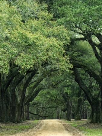 https://imgc.allpostersimages.com/img/posters/road-enclosed-by-moss-covered-trees-charleston-south-carolina-usa_u-L-PN6MWI0.jpg?p=0