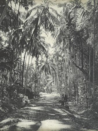 https://imgc.allpostersimages.com/img/posters/road-near-colombo-ceylon-february-1912_u-L-Q1HH1XP0.jpg?artPerspective=n
