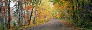 Road Passing Through a Forest, Keweenaw County, Keweenaw Peninsula, Michigan, USA