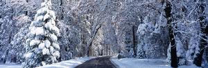 Road Passing Through Snowy Forest in Winter, Yosemite National Park, California, USA