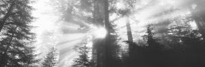 Road, Redwoods Park, California, USA