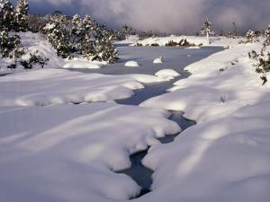 Snow on Franklin River, Cradle Mountains, Lake St. Clair National Park, Tasmania, Australia by Rob Blakers