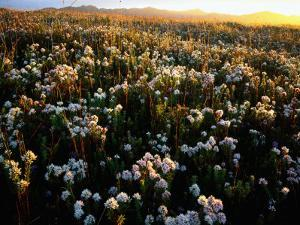 Wildflowers on West Coast by Rob Blakers