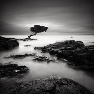 Tree of Temptation by Rob Cherry