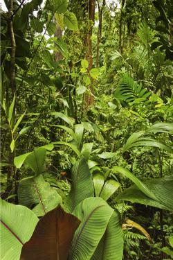 Jungle at Arenal Hanging Bridges Where Rainforest Canopy Is Accessible Via Walkways by Rob Francis