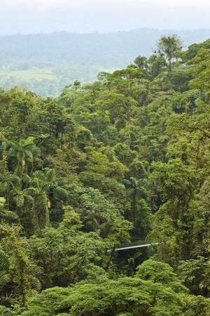 Jungle at Arenal Hanging Bridges Where Rainforest Canopy Is Accessible Via Walkways