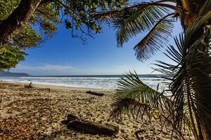 Palm Tree at the Southern Tip of the Nicoya Peninsula, Puntarenas, Costa Rica by Rob Francis