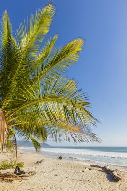 Palm Trees on This Beautiful Surf Beach Near Mal Pais, Santa Teresa, Costa Rica by Rob Francis