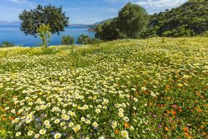 Spring Flowers in Zingaro Nature Reserve Near Scopello on This North West Coast by Rob Francis