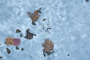 Frozen 1 by Rob Lang