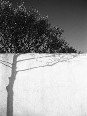 Tree Trunk Shadow on a Wall by Rob Lang
