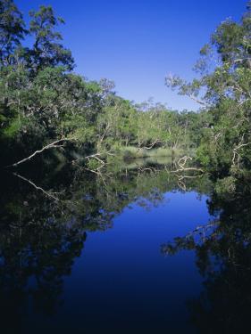Everglades, Noosa, Queensland, Australia by Rob Mcleod