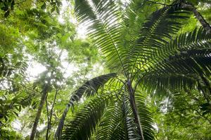 Inside Rainforest, Selva Verde, Costa Rica by Rob Sheppard