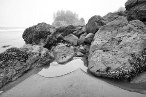 Low Tide, Pacific Ocean, Northern California, Trinidad by Rob Sheppard