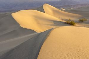 Mesquite Flat Sand Dunes at Dawn, Death Valley, California by Rob Sheppard