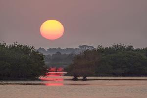 Sunrise, Mangroves and Water, Merritt Island Nwr, Florida by Rob Sheppard