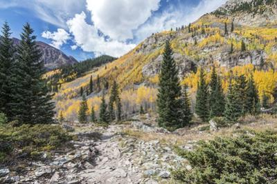 Colorado, White River National Forest, Autumn Color on Maroon Creek Trail by Rob Tilley
