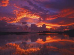Dawn at Nine Mile Pond, Everglades National Park, Florida, USA by Rob Tilley