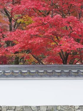 Eikando Temple, Kyoto, Japan by Rob Tilley