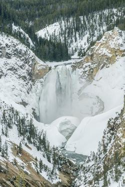 Lower Yellowstone Falls by Rob Tilley