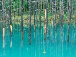 Shirogane Hot Springs, Blue Marsh, Hokkaido, Japan by Rob Tilley