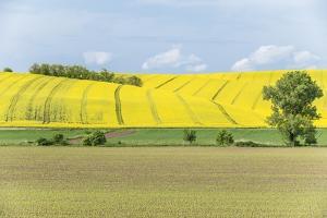 Spring Farm Fields by Rob Tilley