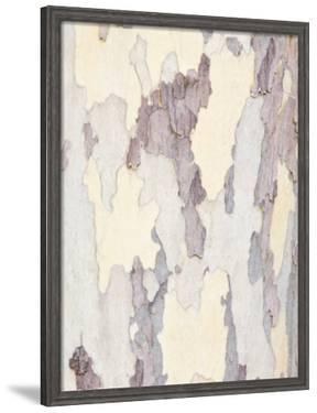 Sycamore Trunk Detail, Sedona, Arizona, USA by Rob Tilley