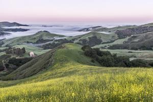 USA, California, Near Paso Robles, Mustard Hill Dawn by Rob Tilley