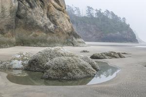 USA, Oregon. Hug Point State Park, foggy beach. by Rob Tilley
