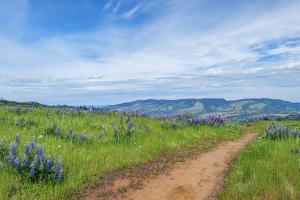 USA, Oregon. Tom McCall Nature Preserve, Rowena Plateau trail. by Rob Tilley