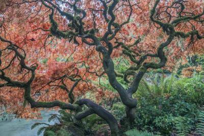 USA, Washington State, Seattle. Kubota Japanese Garden, Reaching for Heaven by Rob Tilley
