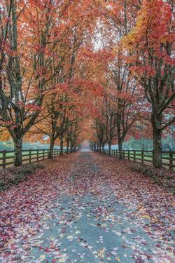 USA, Washington State, Snoqualmie. Autumn country lane. by Rob Tilley