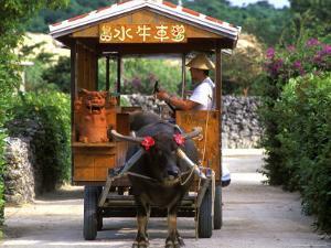Water Buffalo Cart, Taketomi Island, Okinawa, Japan by Rob Tilley